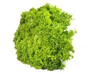 Lollo verde saláta mosott