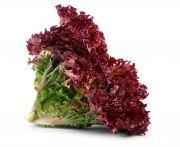 Lollo rosso saláta mosott