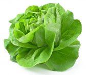 Saláta fejes mosott kg (elo)