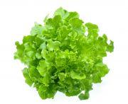 Saláta jégsaláta mosott (elo) kg
