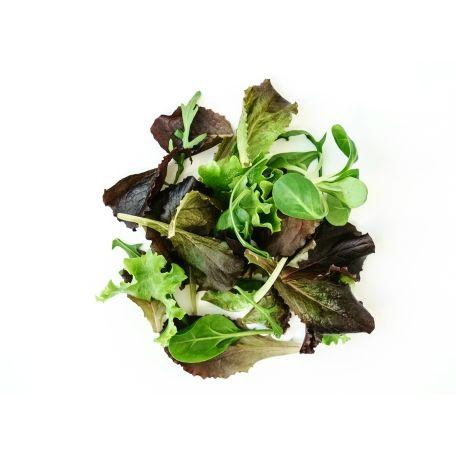 Salanova saláta mix 500g