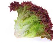 Lollo rosso saláta 1db