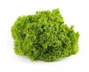 Lollo verde saláta 1db