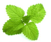 Fűszernövény citromfű kg