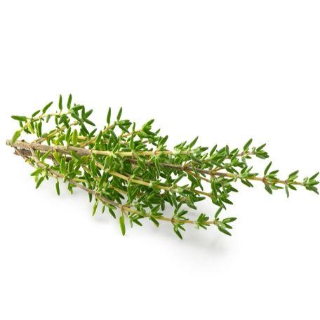 Kakukkfű fűszernövény