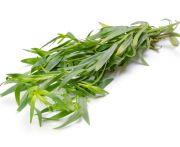 Fűszernövény tárkony kg (elo)