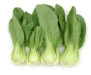 Saláta bébi pak choi 1kg (elo)