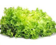 Saláta freeze i.o. kg (elo)